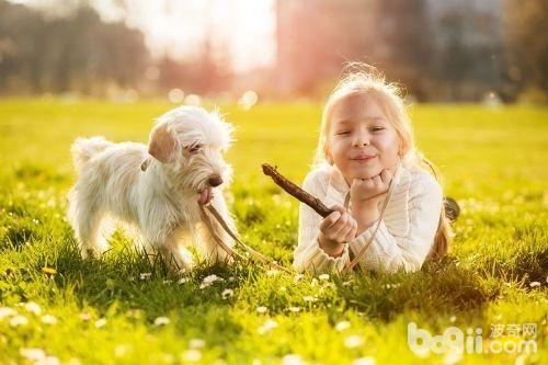 狗狗螨虫皮肤病怎么治疗 狗狗螨虫皮肤病原因有哪些