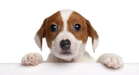 如何训练狗狗能听懂自己的名字?