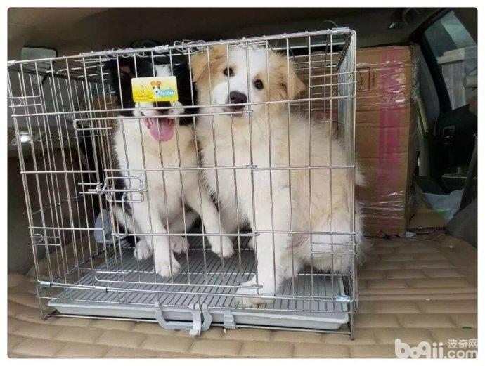 对狗狗进行狗笼训练的好处都有哪些?