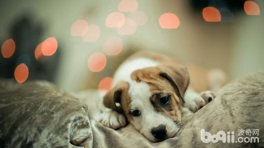 狗狗会无聊吗,狗狗无聊都会做什么?