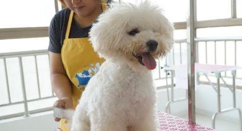 狗狗毛发怎么保养 狗狗毛发保养的方法有哪些