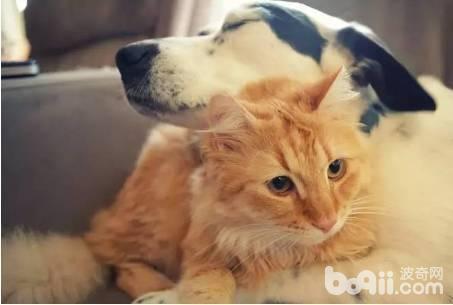 狗狗发情有什么表现 怎么看狗狗是否发情