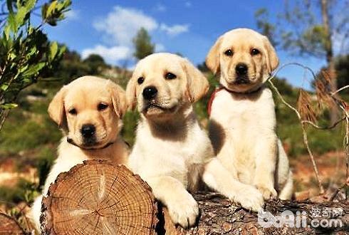 狗狗零食分类 狗狗零食哪种好