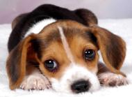 """狗狗肠胃不好怎么调理,补充龙八益生菌拒绝""""玻璃胃"""""""