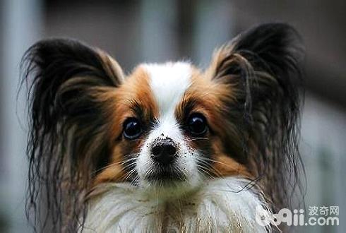 狗狗喜欢吃什么东西 狗狗爱吃哪类东西