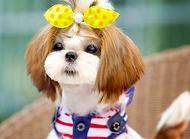 狗狗犬瘟热怎么预防 狗狗犬瘟热症状有哪些