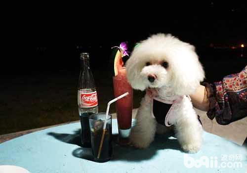 狗狗喝可乐的坏处,狗狗喝可乐的坏处都有哪些?