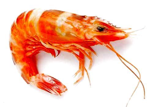 为什么必威官网下载不能吃虾,必威官网下载吃虾的危害都有哪些