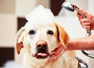 宠物店狗狗洗澡多少钱宠物店狗狗洗澡价格盘点