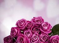 玫瑰花束如何保存能长时间不枯萎
