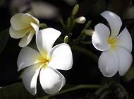 兰花的种植方法以及注意事项