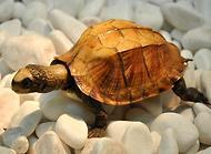 养龟宝典:乌龟生活习性介绍