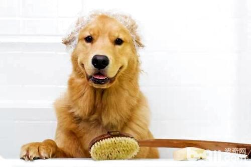 养一只狗要花多少钱?