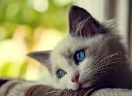 貓細小有什么癥狀?貓細小癥狀表現