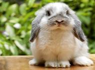 养兔子的方法有哪些?养兔子的方法介绍