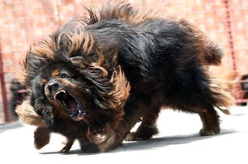 最凶猛的狗
