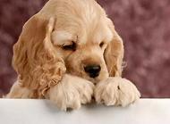 小狗上吐下泻怎么办?小狗上吐下泻的原因