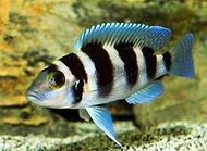 养鱼的水怎么养?养鱼怎么换水?