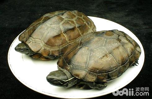 乌龟该怎么喂养?-轻博客