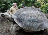 全宇宙最大的乌龟?