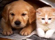 猫狗一起养要注意什么?猫狗一起养的注意事项