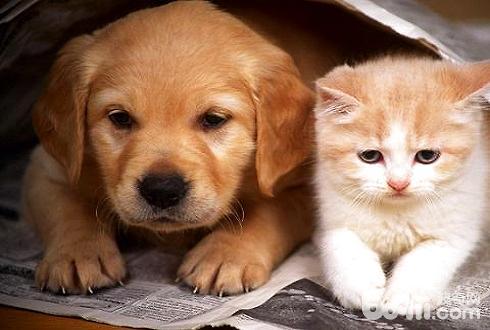猫狗一起养要注意什么