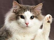 母貓絕育相關事項介紹 母貓為什么要絕育