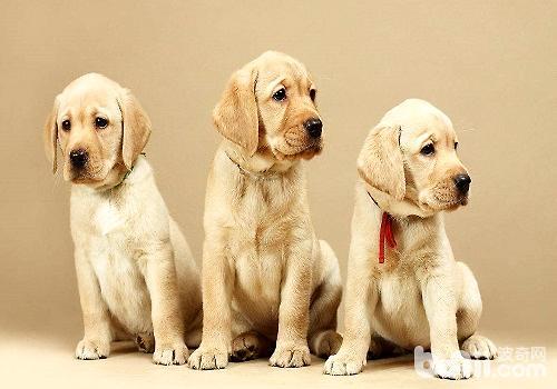 刚抱回家的幼犬应该怎么照顾?