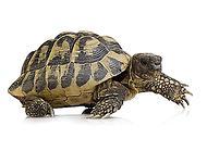 乌龟为什么能活那么久 乌龟能活多少年