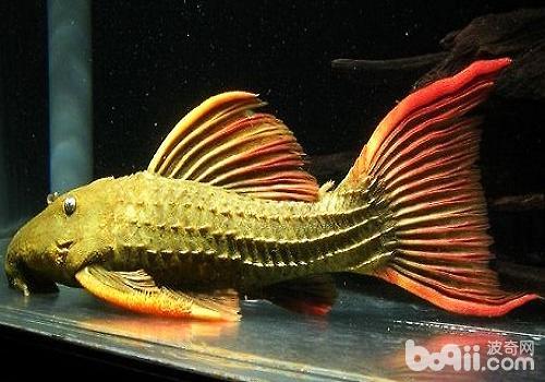 異型魚編號大全_異型魚大全_異型魚書籍