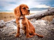狗狗被抛弃 狗狗知道被抛弃的表现