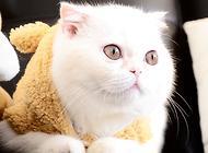 猫罐头推荐,猫粮品牌良心总结推荐