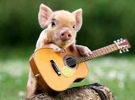 小香猪多少钱一只 小香猪价格盘点