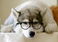 狗瘟能治好吗?治好狗瘟要多少钱?