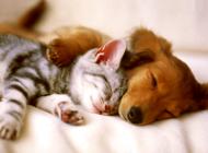 猫和狗到底哪个更聪明?
