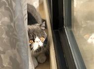 最受欢迎的宠物猫排行榜?