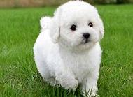 狗狗肝炎症状有哪些?狗狗肝炎防治