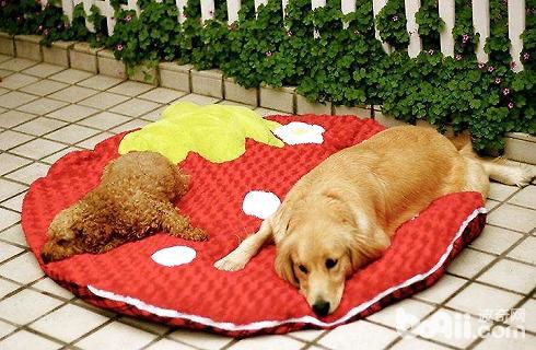 犬 寿命 小型