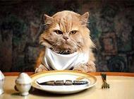 猫为什么喜欢吃鱼?给猫吃鱼需要注意什么
