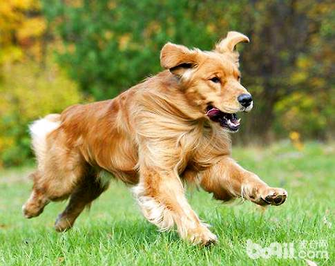 家里养狗的十大坏处