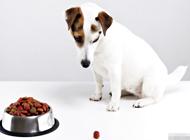 狗狗不吃东西居然是这个原因?