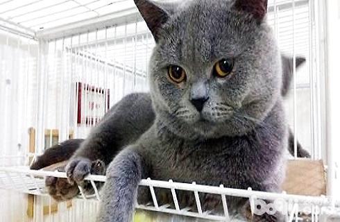 蓝猫 (2).jpg