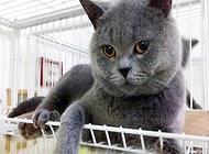 公貓最佳絕育時間?貓貓絕育多少錢?