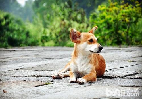 狗狗有异食癖怎么办