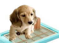 狗狗尿路感染怎么办?狗尿道感染症状