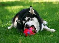 如何训练狗狗找东西?