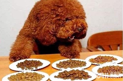 如何选择狗粮?