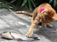 猫的寿命是多少年?如何让猫活的更久?