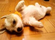 狗狗怎么训练?有多少种训练方法?