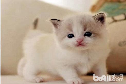 幼猫吃哪种猫粮好?